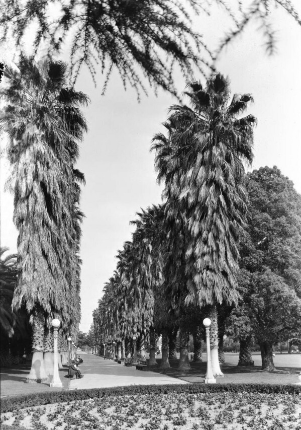 South Park's palm-lined avenue in 1926. Courtesy of the USC Libraries - California Historical Society Collection.