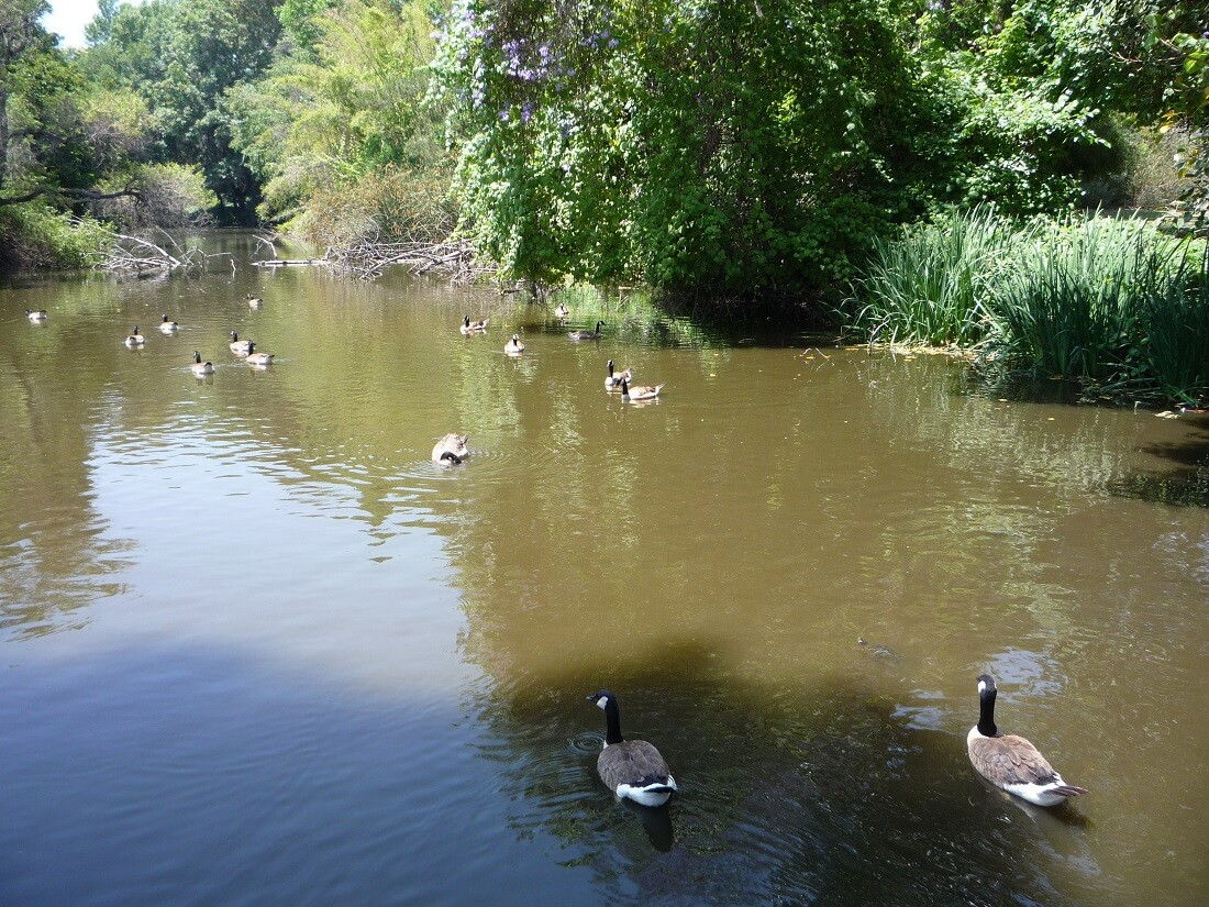 Baldwin Lake (1)