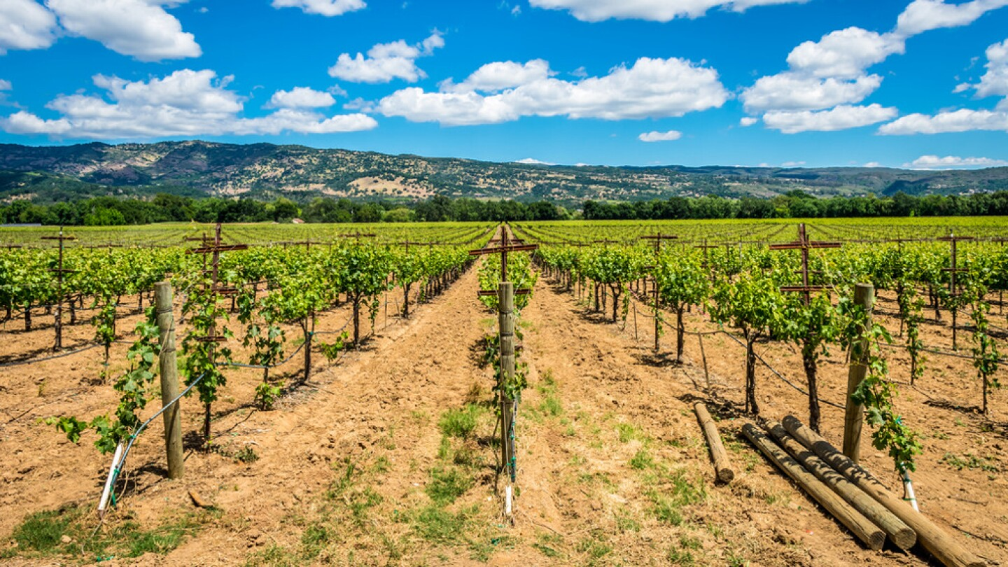 Vineyards in Napa County occupy almost ten percent of the county's total land cover. | Photo: James Faulkner, some rights reserved