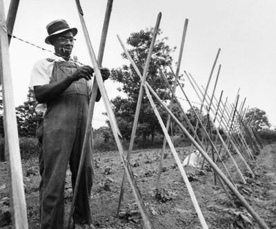 Farming in Richland Farms