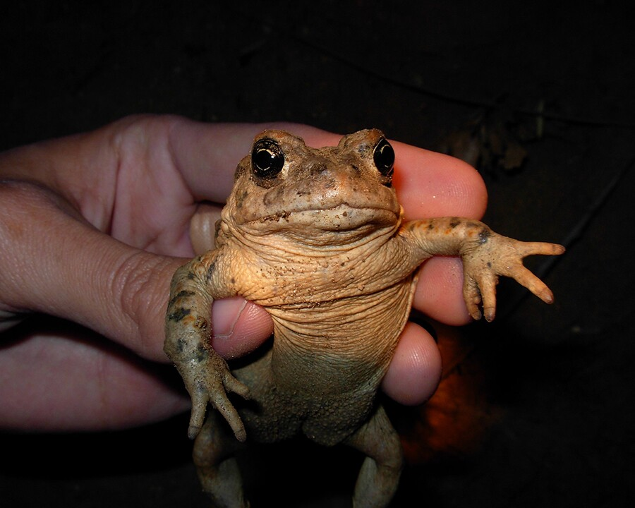 toad_hello.jpg