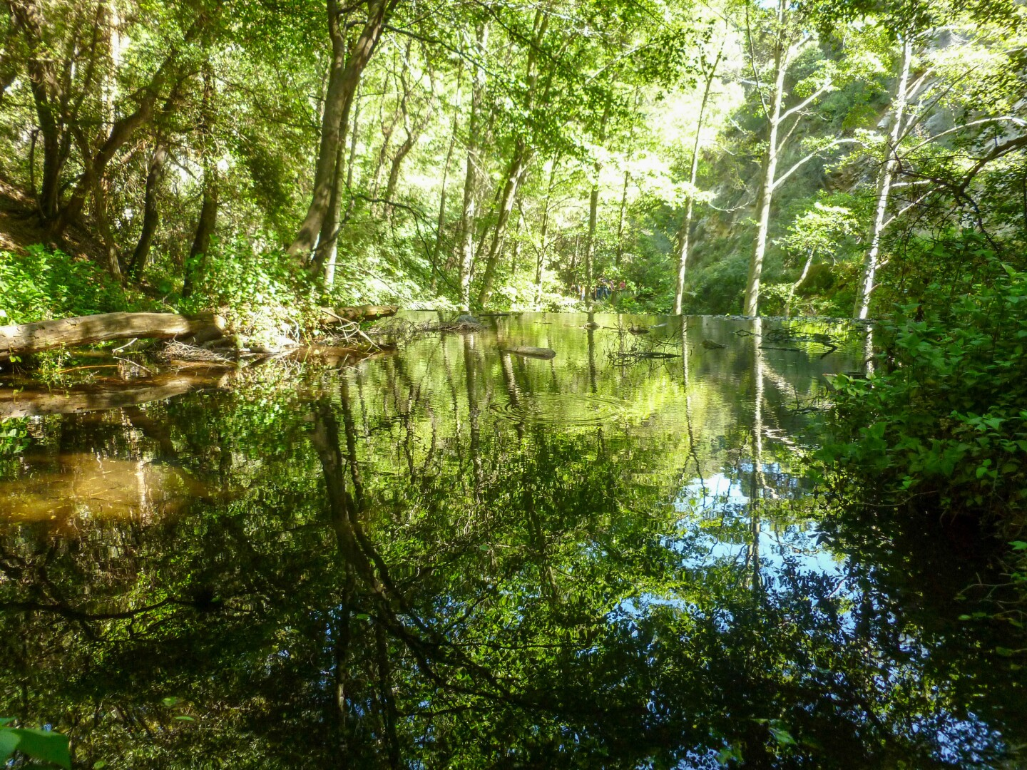 Trees reflect off the surface of a body of water at the Sturtevant Falls hike in the Chantry Flat area of the Angeles National Forest.