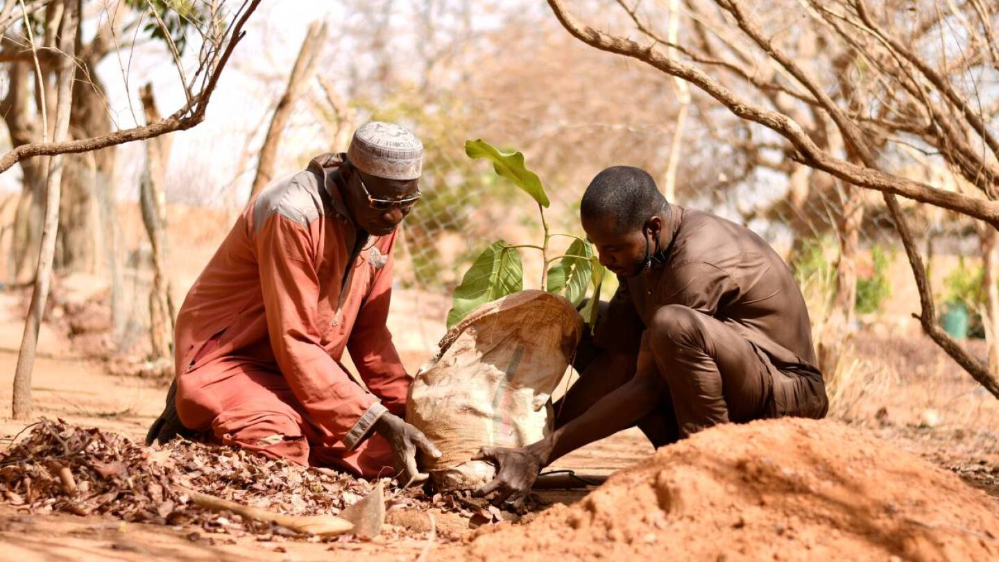 Two men in long clothing plant a small tree together.