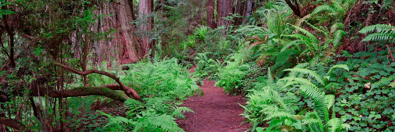 trillium trail flora