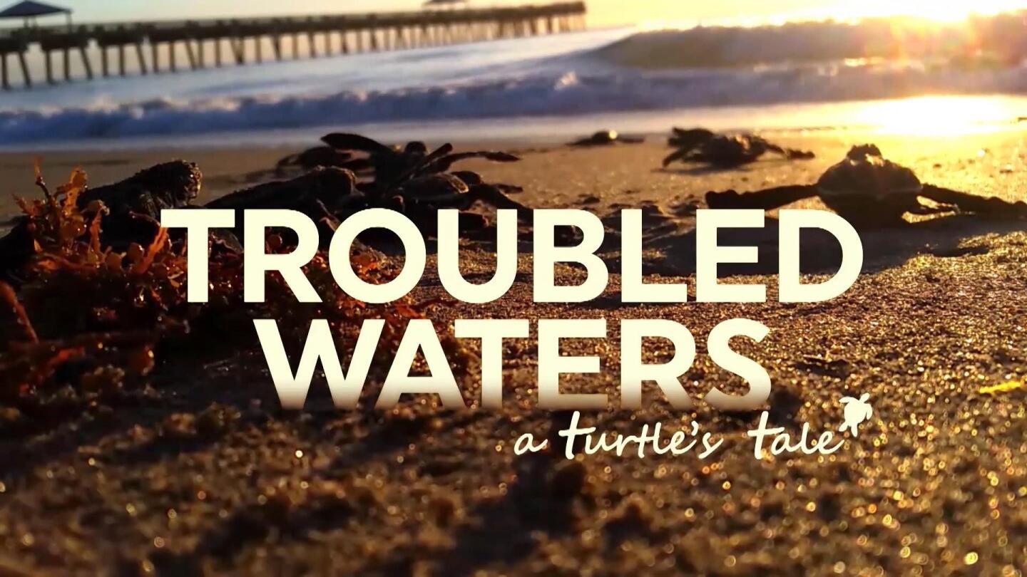 """Promotional image for """"Trouble Waters: A Turtle's Tale."""""""