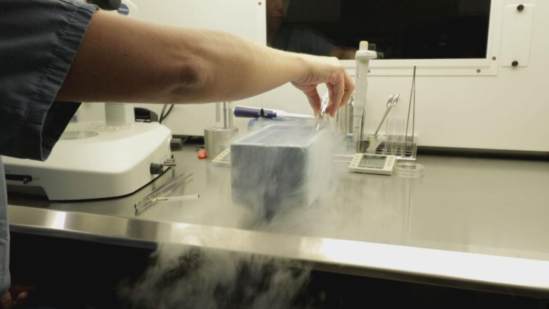Embryo Lab