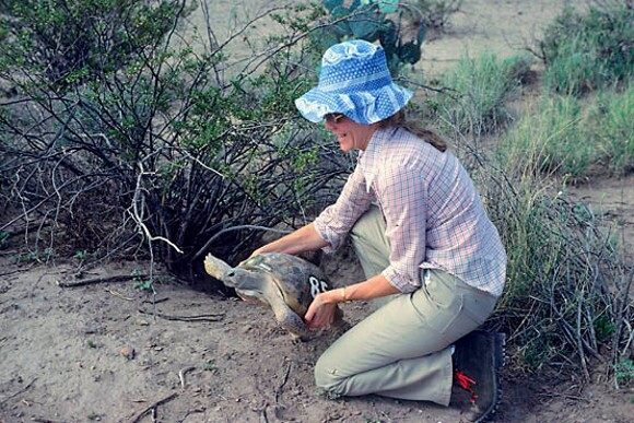 Dr. Berry holding a Bolson tortoise in the Chihuahuan Desert of Mexico during a 1970s research trip. | Photo: Courtesy Dr. Berry.