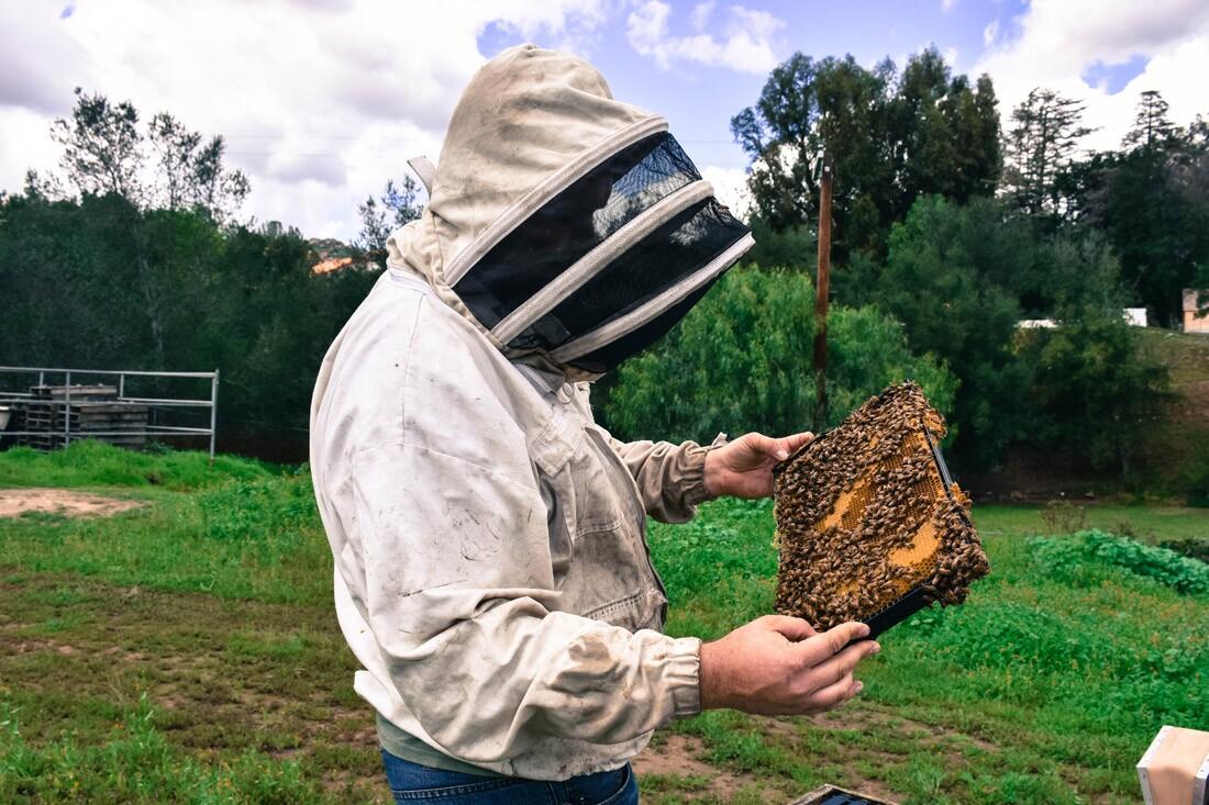 Valley Hive, Jeremy Jensen