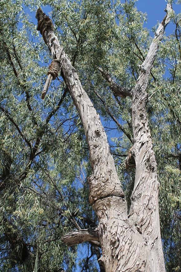 "Eucalyptus ""Hangman's Tree"" with noose, Ghost Town, Knott's Berry Farm, Orange County, 2012. Photograph by Loren Javier."