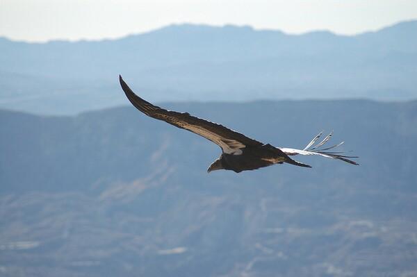 condor-refuge-visitor-plan-1-10-14-thumb-600x399-66789