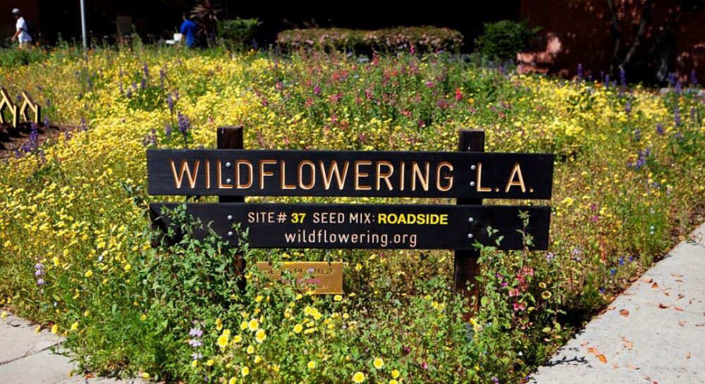 "Fritz Haeg, ""Wildflowering L.A.,"" 2013."