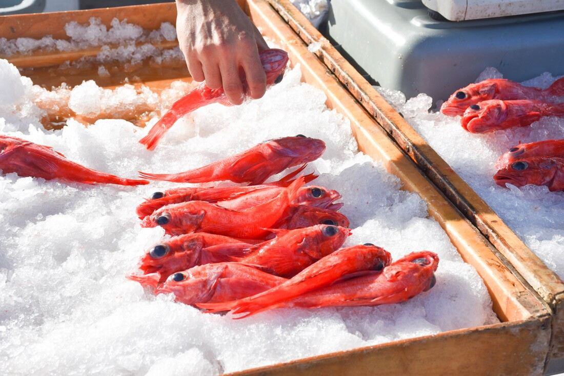 Fish for sale at Tuna Harbor Dockside Market