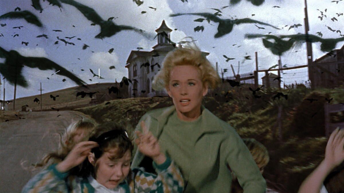 The Birds film still | Courtesy of Adama Films/ Zeitgeist Films