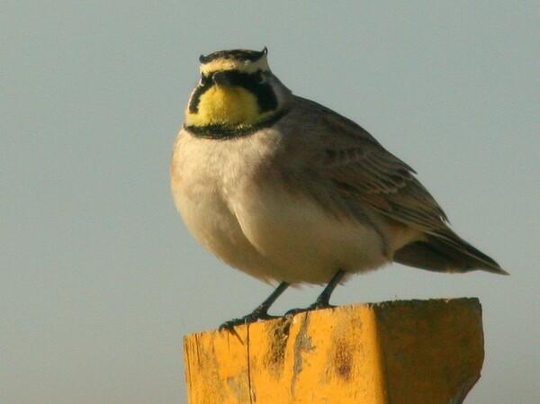 ivanpah-birds-march-4-22-14-thumb-600x449-72666