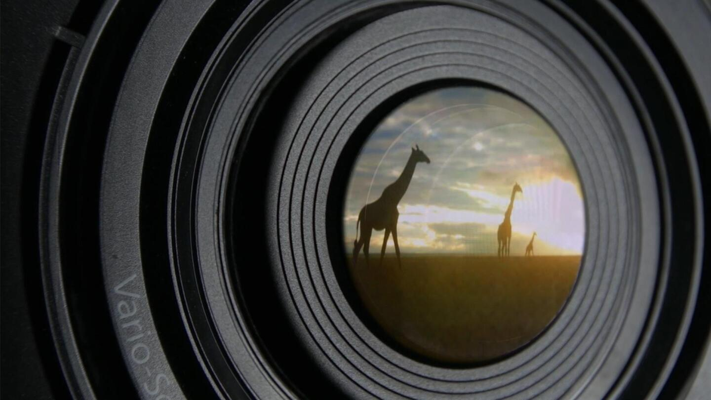 "Closeup image of a camera lens with a reflection of giraffes on it. | From ""NOVA: Animal Espionage"""