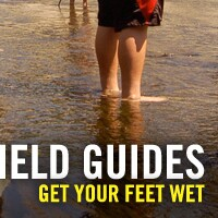 get-your-feet-wet