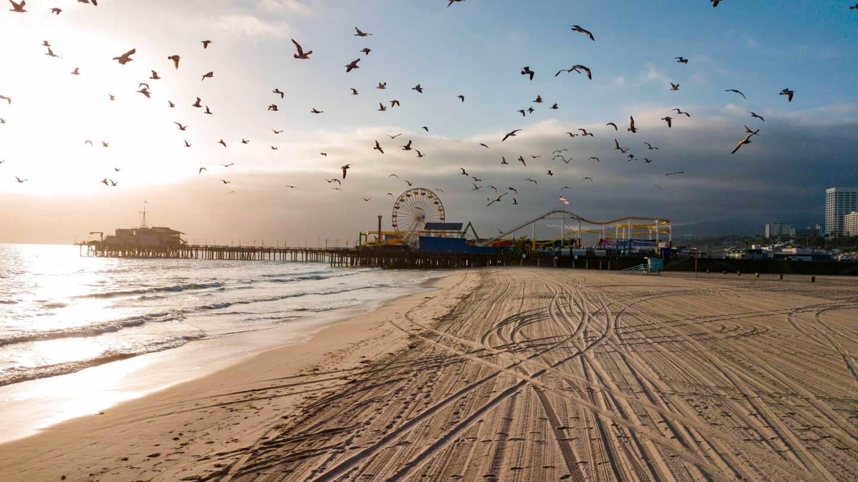 Birds fly over an empty Santa Monica beach.