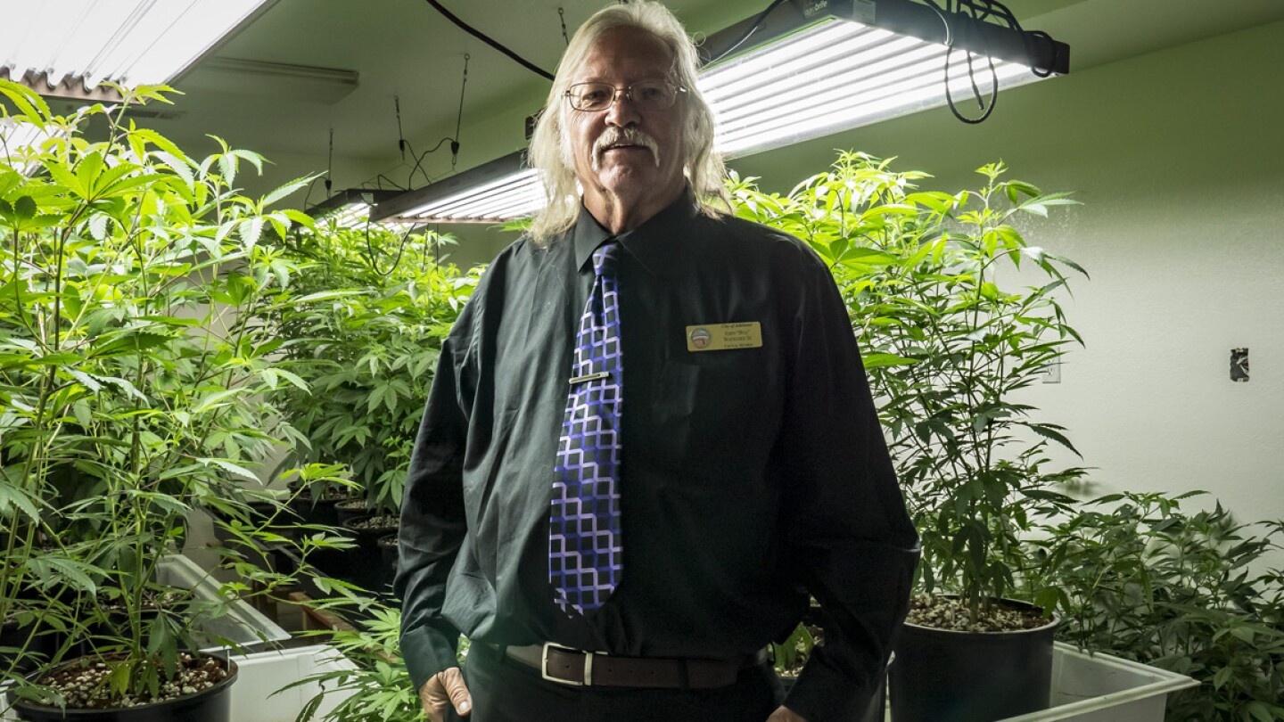 """Adelanto councilman John """"Bug"""" Woodard pictured with a local grower's """"mother trees"""" that will be later cloned for large-scale marijuana cultivation. (featured)"""