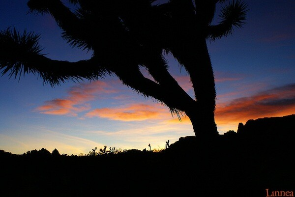 joshua-tree-national-park-geo