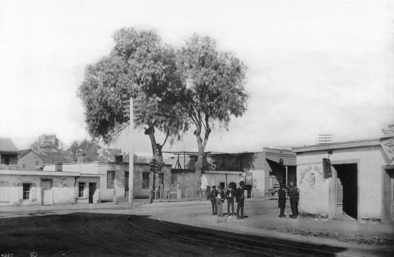 Magnolia Saloon