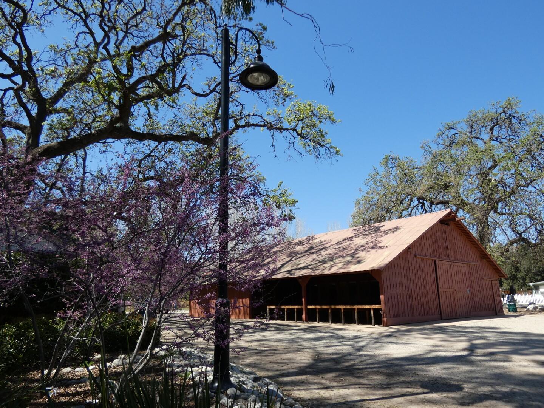 A Western redbud tree at Orcutt Ranch in San Fernando Valley.