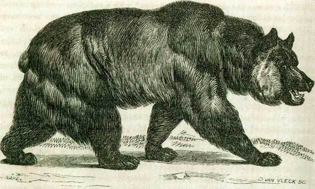 hutchings-bear-thumb-630x378-94672