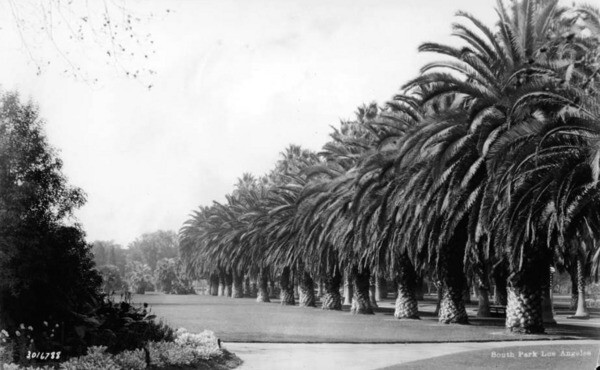 The park's promenade was lined with both fan palms and Canary Island date palms. Courtesy of the USC Libraries - California Historical Society Collection.