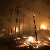 Woolsey Fire Burning Trees in Malibu, CA