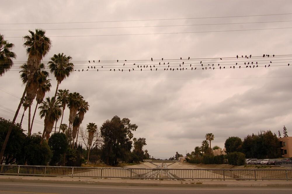 Birds on a Wire Above LA River