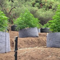 pot-grow-santa-cruz-7-21-14-thumb-600x427-77897