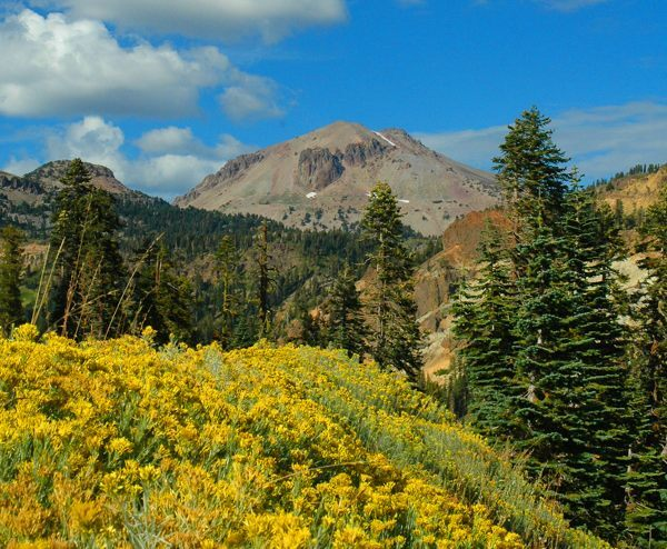 Rubber rabbitbush, Lassen Peak on September 24th, 2011 | Photo: Amanda Sweeny, National Park Service
