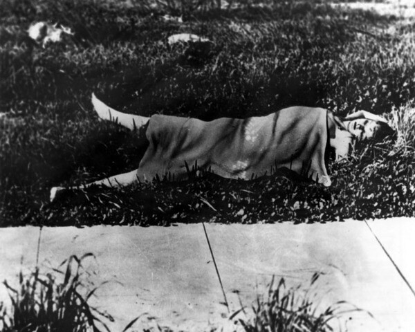 Black Dahlia murder scene (altered photograph), ca. 1947 | Image: Courtesy of Los Angeles Public Library