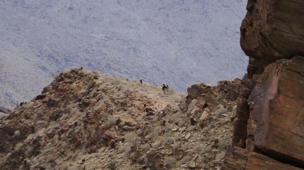 Hikers on the Victor Trail in Indian Canyons. | Photo: Zach Behrens/KCET