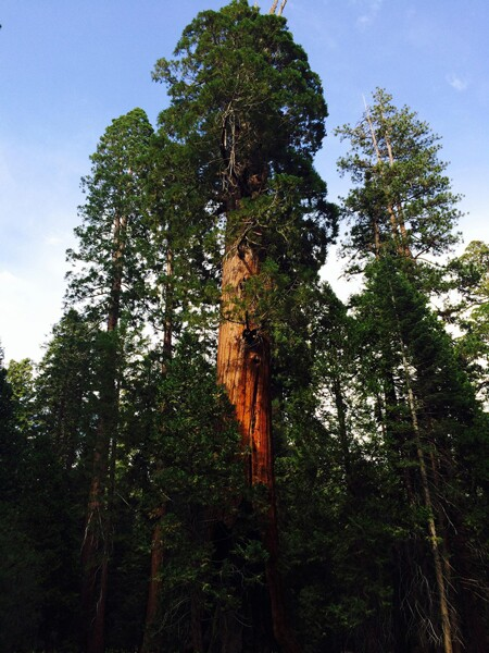 In Giant Sequoia National Monument | Photo: Christine Warner Hawks, some rights reserved