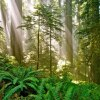 Courtesy of Del Norte Coast Redwoods State Park