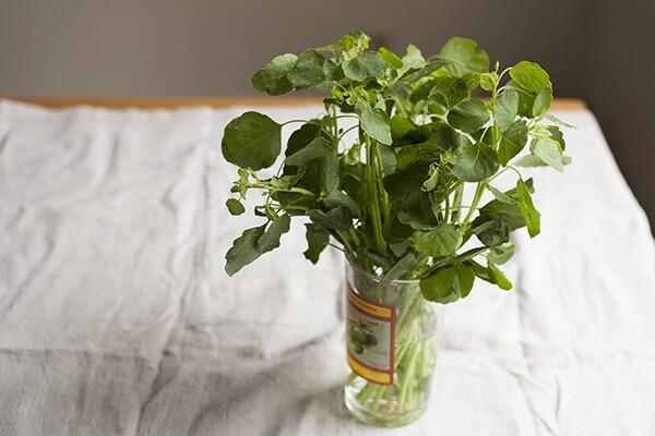 Bouquet of Fresh Papalo | Photo by Maria Zizka