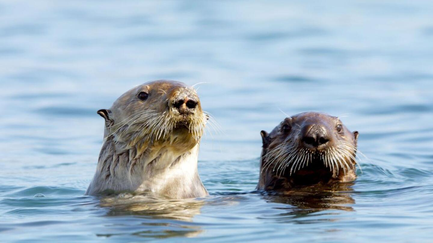 Animals look on from the water.