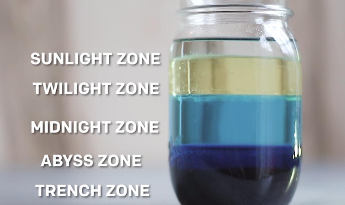 Five ocean zones in a jar. | PBS.org