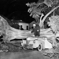 A car wrecked by a 75-foot cypress tree, felled by strong winds in Palms in 1955. Courtesy of the Herald-Examiner Collection, Los Angeles Public Library.
