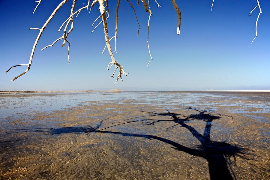 """Dead Tree, Bird Nests & Shadow."" Salton Sea, CA. 2014. 