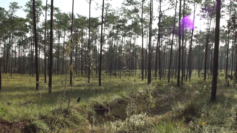 Grassy field in Nicaragua with sun peeking through tall trees. | Trust Docs