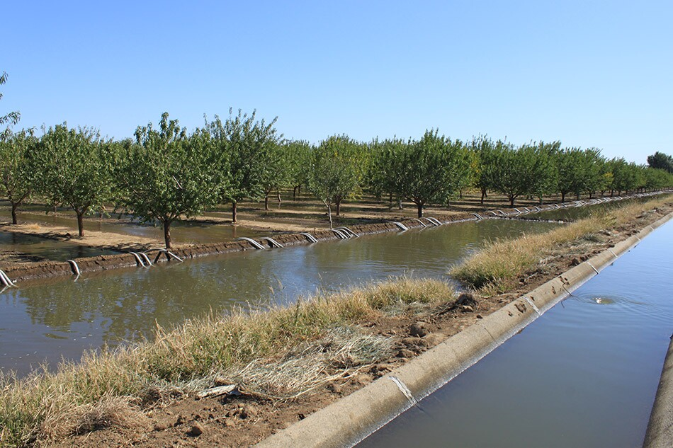 Trees and Irrigation Channels