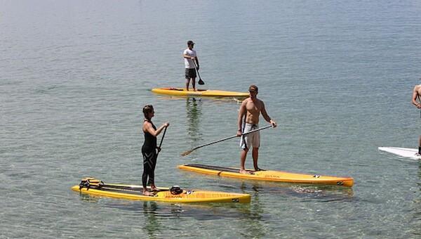 shark-attack-catalina-island-paddleboard