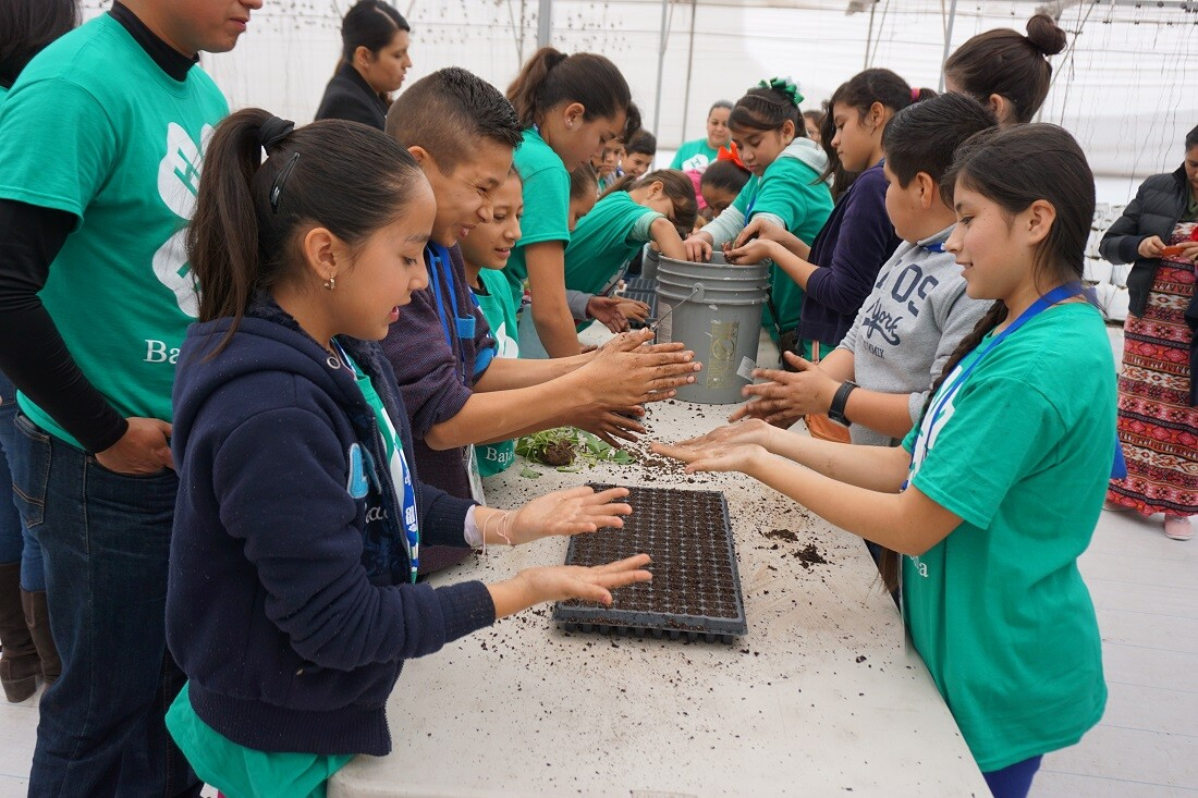 Mexican children dipping their hands into pails of soil to check the moisture level and tapping the soil into seed trays.