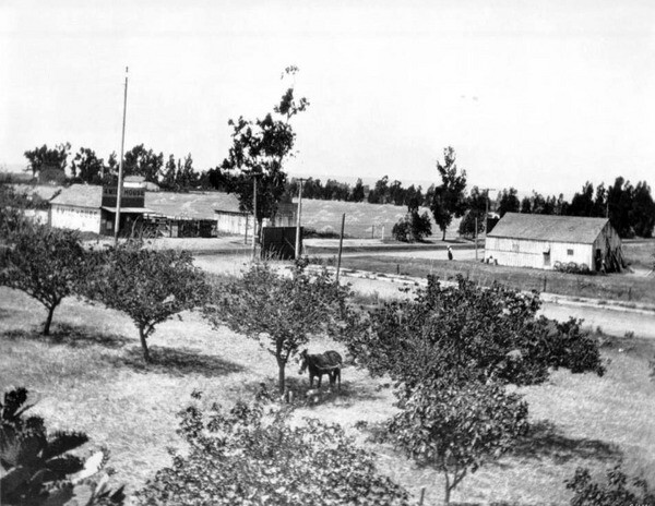 Orchard at Western and Washington, circa 1899. Courtesy of the Title Insurance and Trust, and C.C. Pierce Photography Collection, USC Libraries.