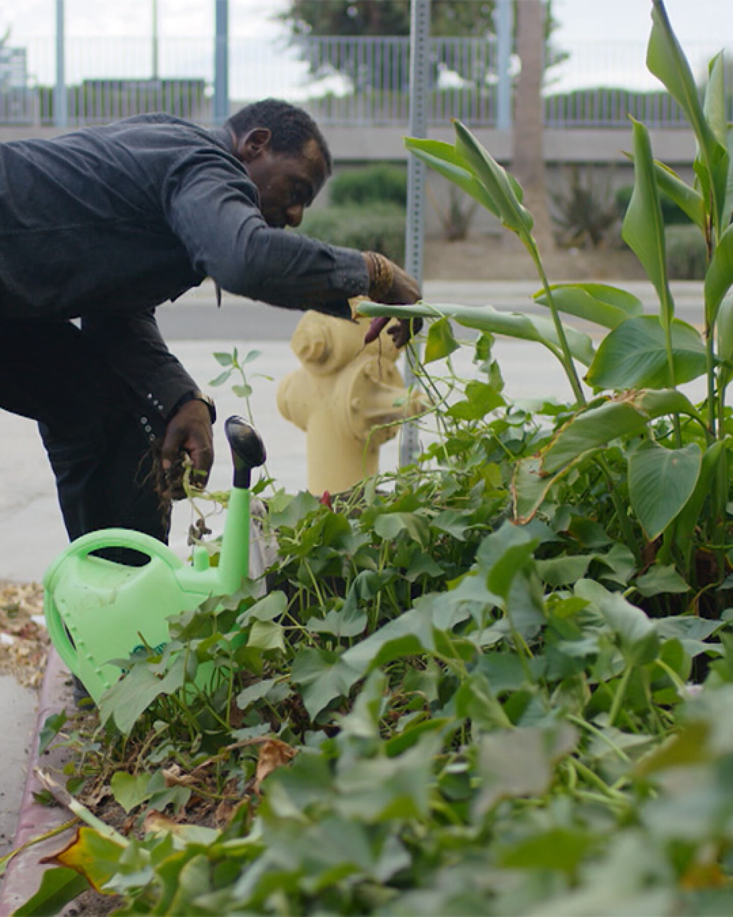 "Ron Finley tending his garden at the parkway. | Still from ""Broken Bread"" Access"