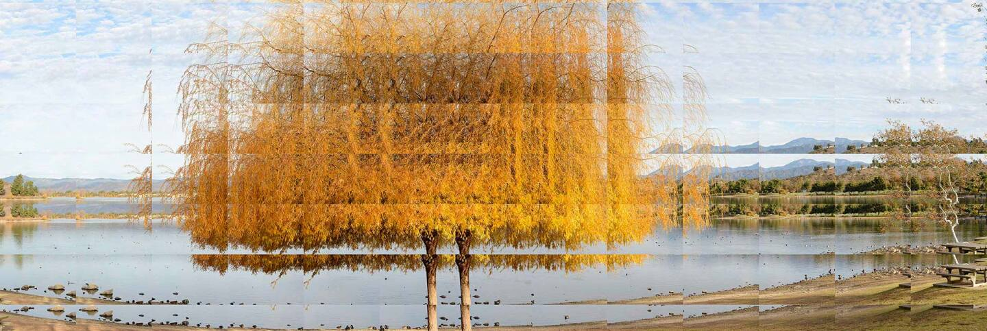 """Robbert Flick, """"EV_Willow131217a"""" 