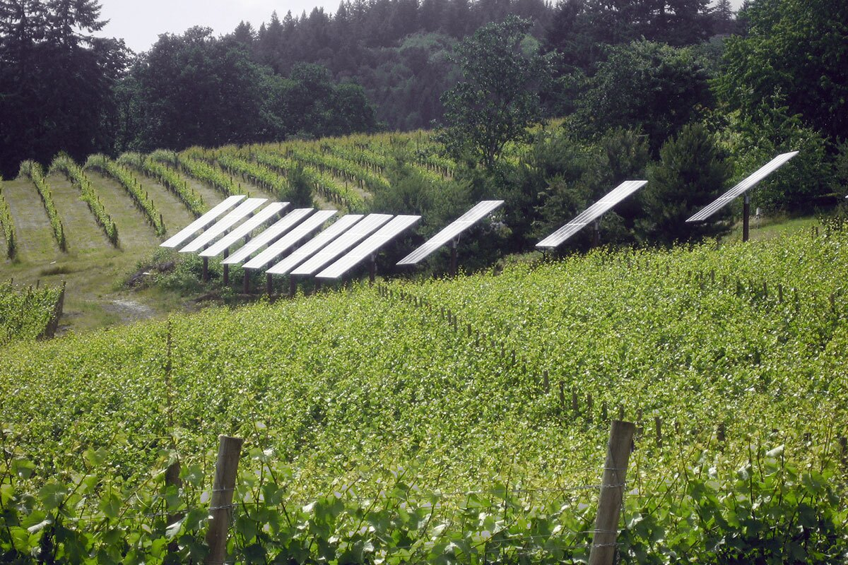 Oregon vineyard in the Willamette Valley wine region utilizing solar power. | Jason Lander/Creative Commons License