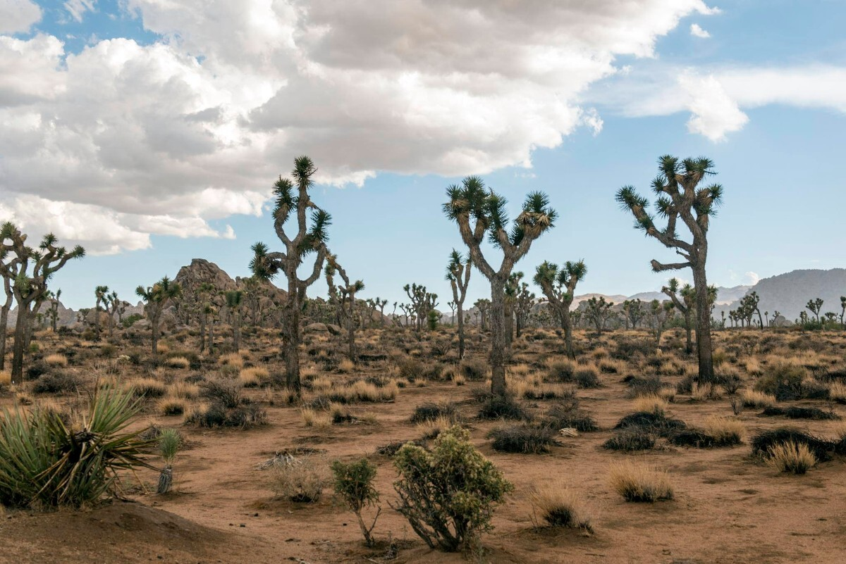 Joshua Tree National Park | Christopher Michel | Some Rights Reserved