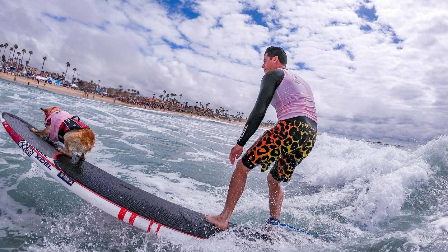 Man in pink and black rides a wave with his dog in front of him on the surfboard